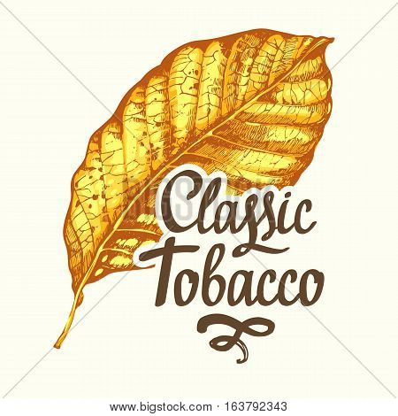 Vector illustration with tobacco yellow dried leaf in sketch style. Old classical tradition of smokeking. Lettering design.