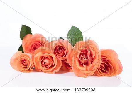 Bouquet Roses In Front Of White