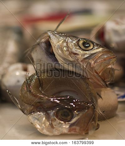 Small hake with their tail in their mouth. Known in Spain as