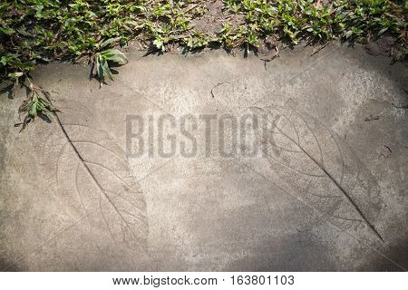 Leaf print on concrete texture in garden stock photo