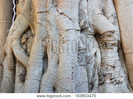 Rare texture of tree bark stock photo