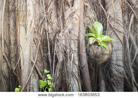 Rare texture of tree bark stock photo