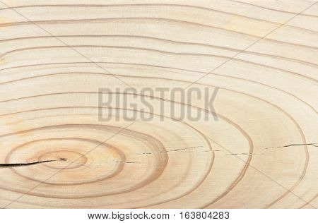 Wood Texture and Background with Age Ring
