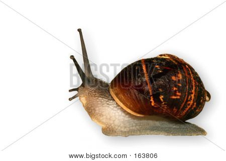 The Snail, Slow And Slimey