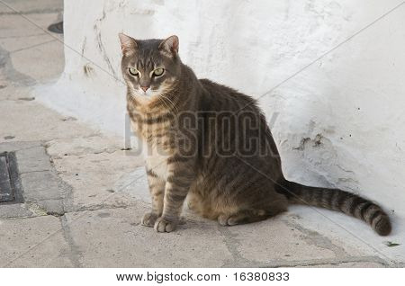 Close up of a tabby cat in an alleyway. poster