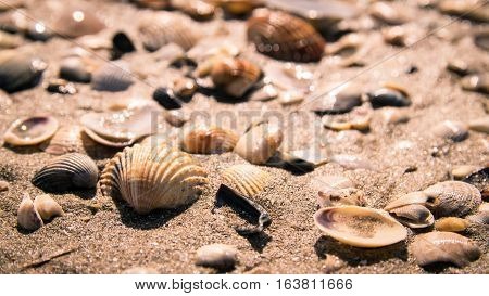 Background formed by shells on the seashore.