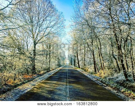 Road ahead between snow covered trees under a clear blue sky