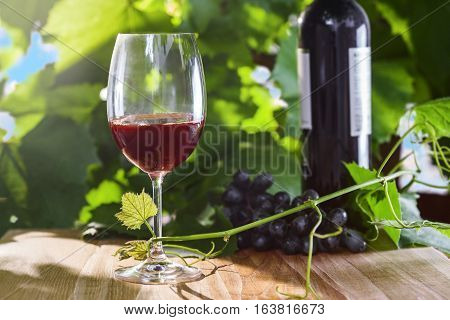 Wine glass with grapevine on a table. Delicious alcohol drink.