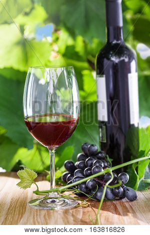 Glass of vintage red wine on a table grapevine on background. Outdoor shot.