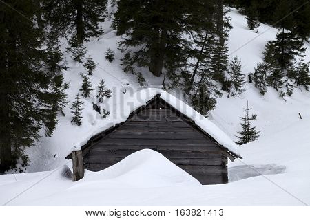 Old wooden hut covered with snow in winter forest at gray day. Ukraine Carpathian Mountains.