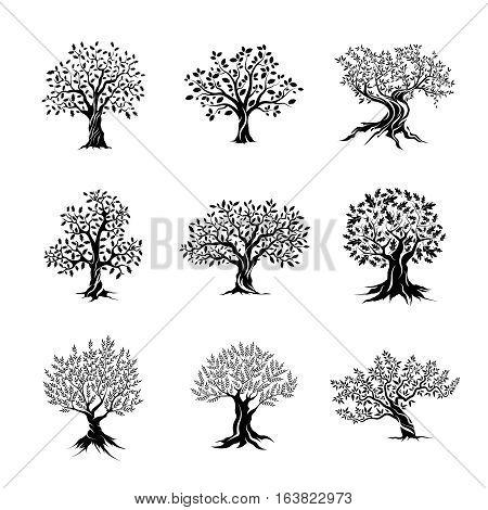 Beautiful magnificent olive and oak trees silhouette isolated on white background. Web infographic modern vector tree sign. Premium quality illustration logo design concept pictogram set. Ukraine