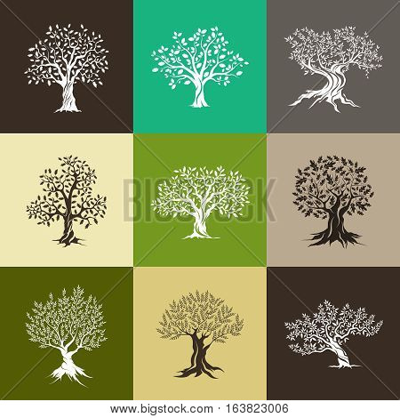 Beautiful magnificent olive and oak trees silhouette isolated on color background. Web infographic modern vector tree sign. Premium quality illustration logo design concept pictogram set. Ukraine