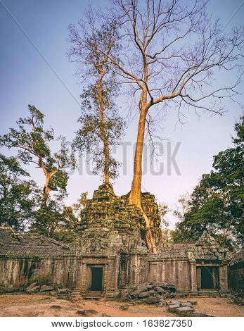 Ta Prohm Temple in Angkor Complex Siem Reap Cambodia. It has been left largely unrestored with trees growing among the ruins. Ancient Khmer architecture famous Cambodian landmark, World Heritage