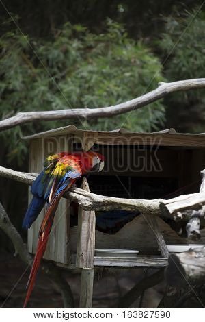 Scarlet macaw perched near a bird house