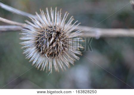 Dry spike flower in my back garden