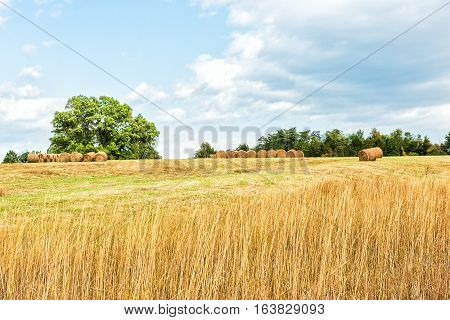 Hay roll bales on countryside field with tall dry grass