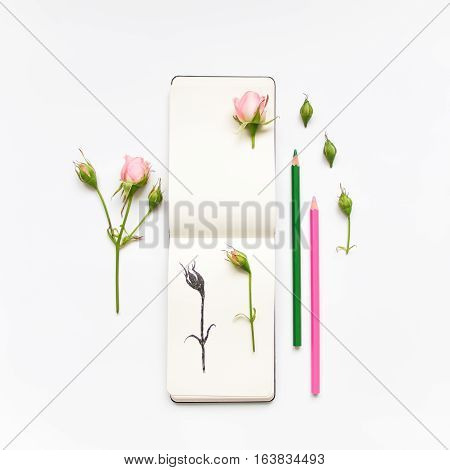 Colorful composition with sketchbook pink roses and pencils. Botanic illustration of a rose. Flat lay on white table top view