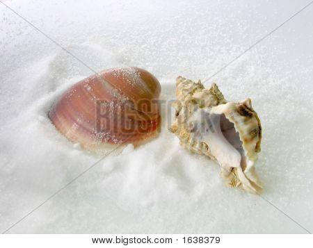 Salt And Shells