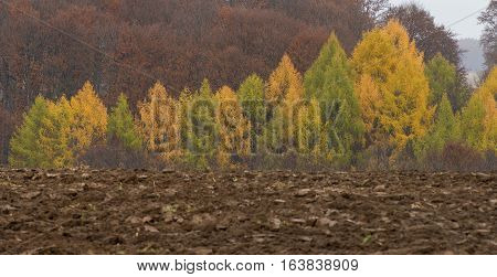 Autumn forest. Composition of nature in autum