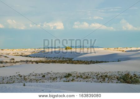White sand dunes in New Mexico during sunset with plant shrubs
