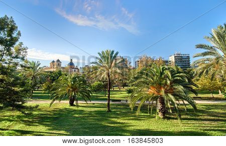 Turia Gardens Park in Valencia Spain with Palm Trees