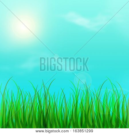 The beautiful summer weather. The warm bright day and meadow. Young grass and sun. Spring background. Summer.