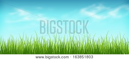 Fresh grass and blue sky with clouds. Beautiful spring day. Spring background. Summer. Warmly. Meadow. The awakening of nature.
