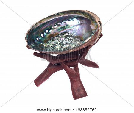 Bright polished rainbow abalone shell on wooden cobra stand isolated on white background