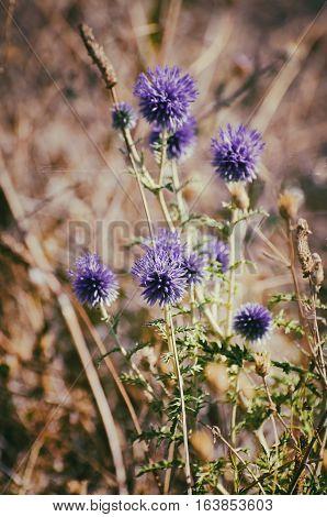 Photo of Summer Bright Flower Sunny Field
