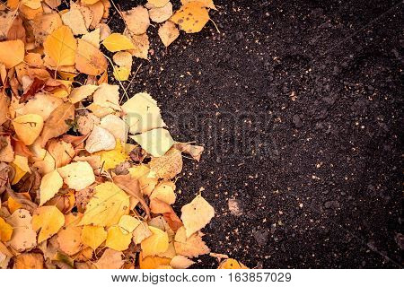 Yellow Autumn Leaves And Dirt Background