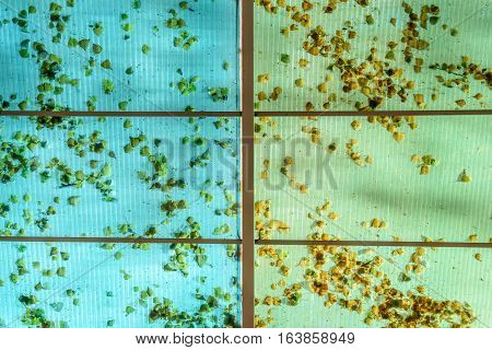 Fallen Leaves Ceiling Background