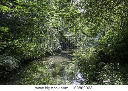 Forest stream running through dense green vegetation in summer. A tropical paradise lost.