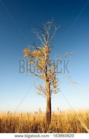 Single Tree In Barren Landscape Background