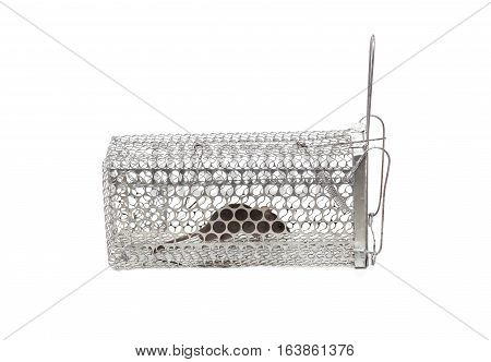 A mouse in a cage trap isolated