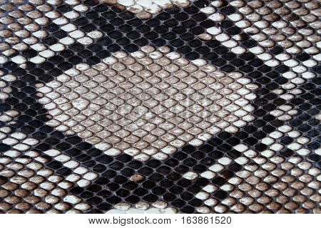 close up black texture leather Snake skin