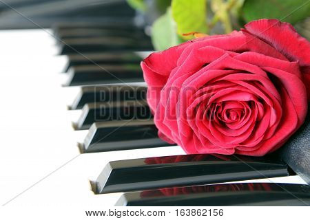 Red Rose On Piano Keyboard. Valentines Day Concept, Romantic Music