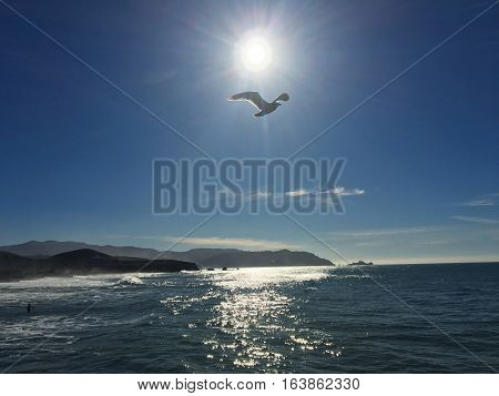 Seagull in sunlight flying above Pacifica Beach