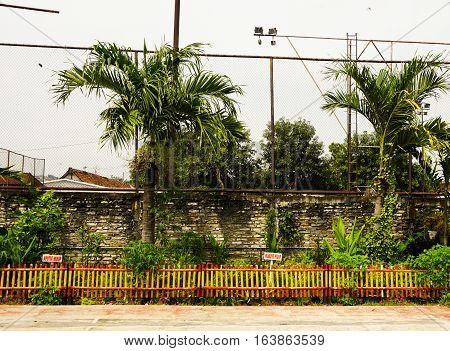 palm trees near a sport field with brick walls photo taken in Semarang Indonesia java