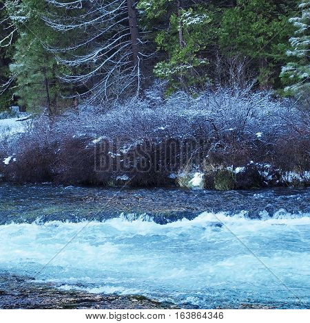 The banks of the Metolius River at the blue waters of Wizard Falls in CentraI Oregon with fresh snow on the bushes and trees on a winter day.