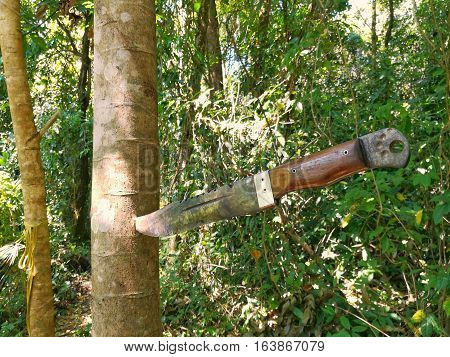 Camping knife stab on the tree in the forest.