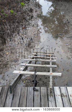 The Wooden stairs Down to the mangroves