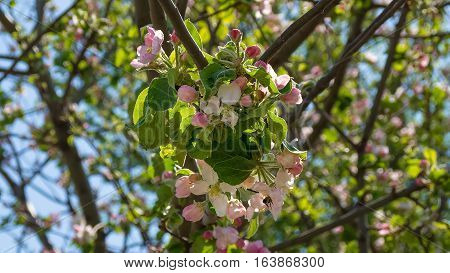 A branch of a tree that blooms beautifully