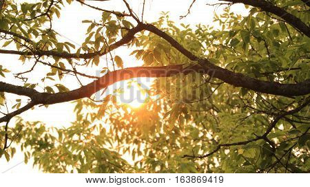 Sunlight filters though the limbs of a tree.