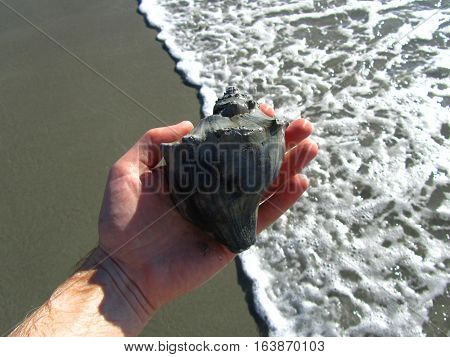 holding a seashell above the surf by the seashore