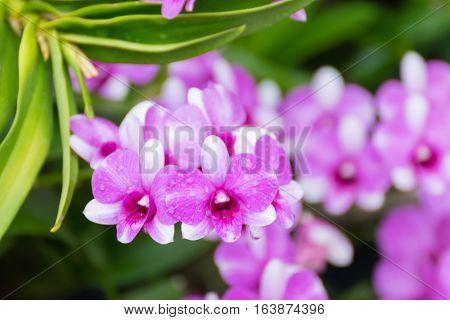 Flower (orchidaceae Or Orchid Flower)
