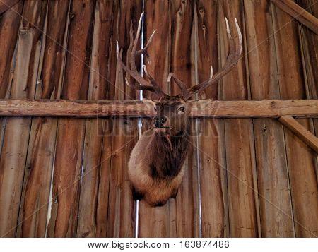 Rustic Hanging Male Deer Head in Chalet