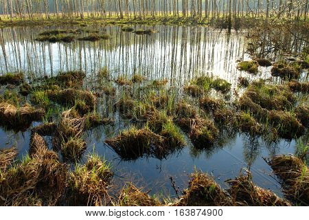 tussock grass to the swamp and shallow puddles