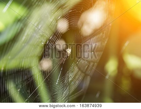 cobweb and spider blur background and flare