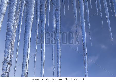 Clear icicles hanging down against a bright blue sky.