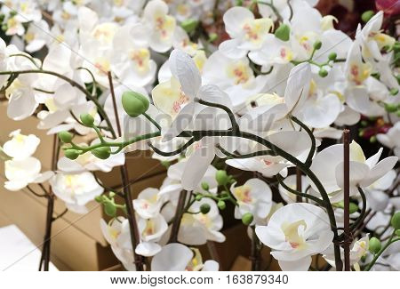 Flower and Plant White Artificial Phalaenopsis or Orchid Flower Streak for Home and Building Decoration.